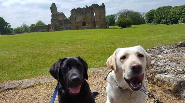 Daisy and Archie tongues out old Sherborne Castle